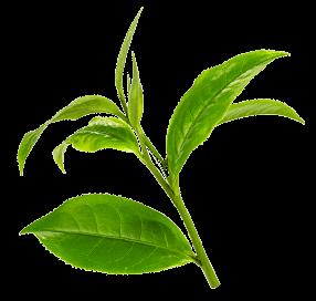 Brzoskwinia-<strong>Zielona herbata</strong> - 2